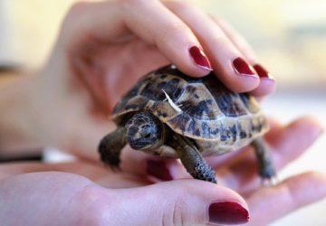 Jak chovat želvu