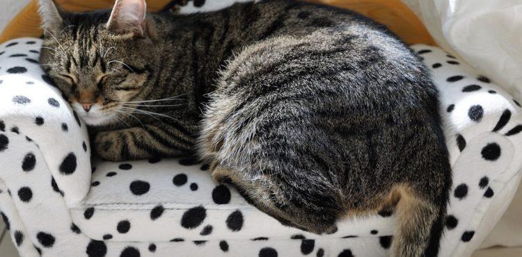 Péče o kočku po kastraci