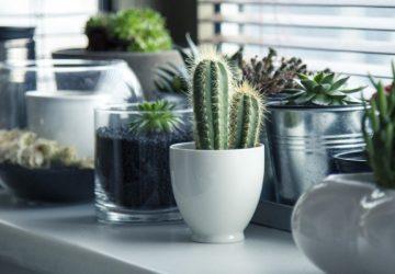 Nejen pro květiny: 3 nápady, jak efektivně vybavit parapet